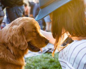 Ile kosztuje kremacja psa?